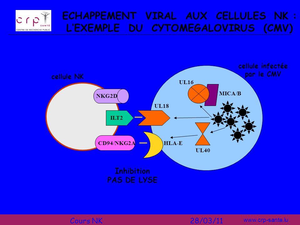 ECHAPPEMENT VIRAL AUX CELLULES NK : L'EXEMPLE DU CYTOMEGALOVIRUS (CMV)