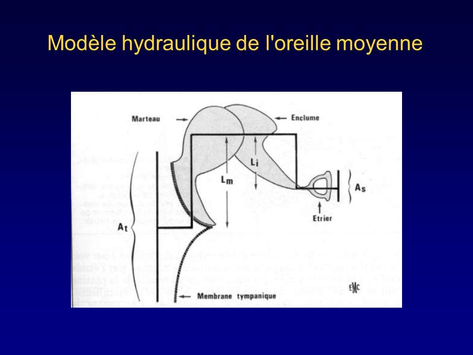 Modèle hydraulique de l oreille moyenne