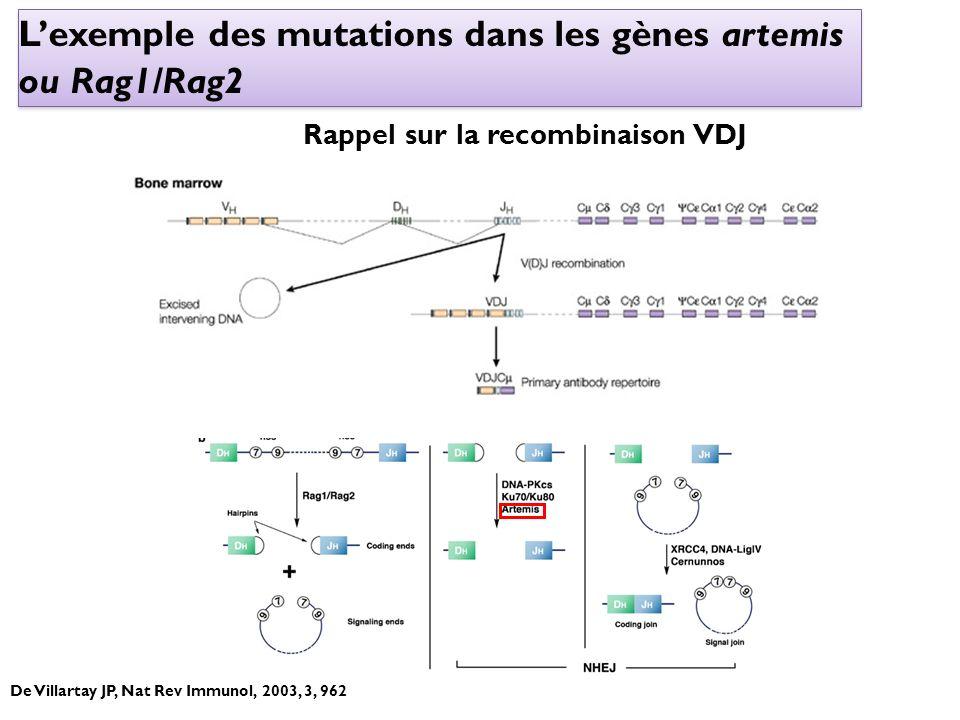 L'exemple des mutations dans les gènes artemis ou Rag1/Rag2