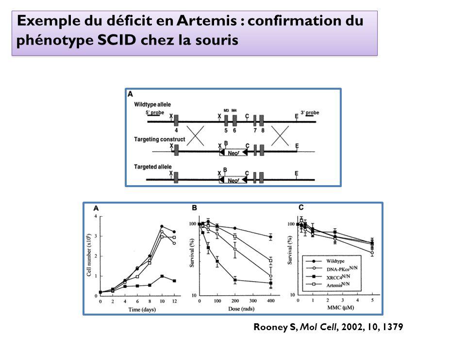 Exemple du déficit en Artemis : confirmation du phénotype SCID chez la souris