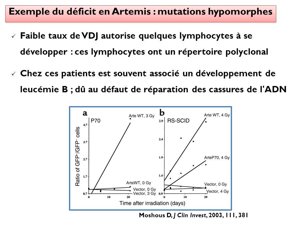 Exemple du déficit en Artemis : mutations hypomorphes