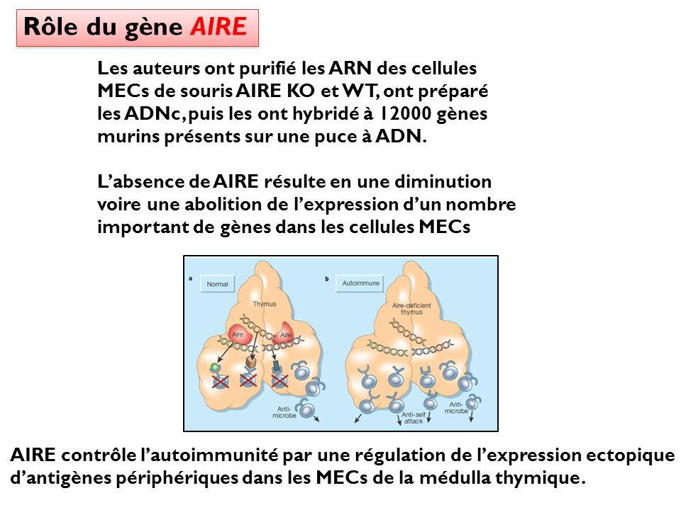 Rôle du gène AIRE Les auteurs ont purifié les ARN des cellules