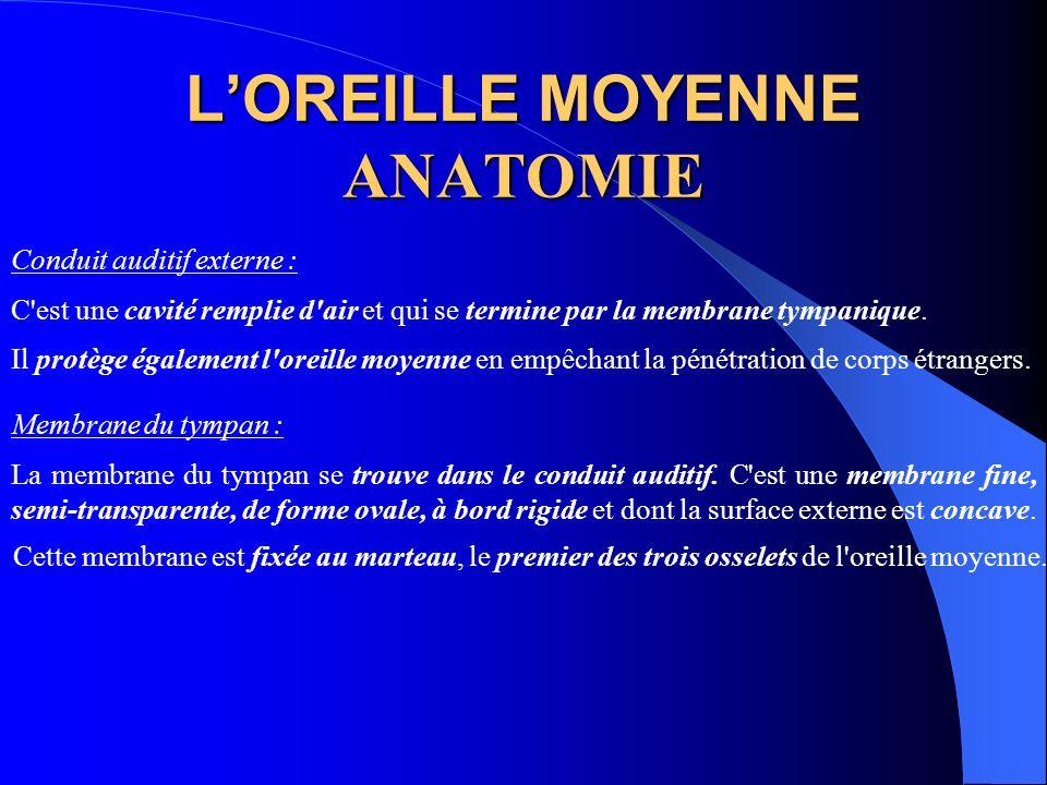 L'OREILLE MOYENNE ANATOMIE