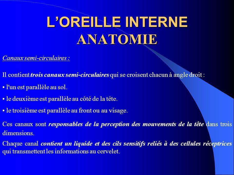 L'OREILLE INTERNE ANATOMIE