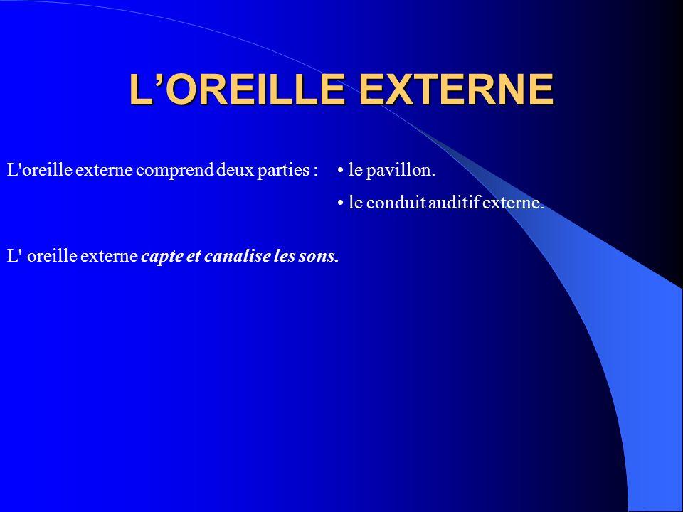 L'OREILLE EXTERNE L oreille externe comprend deux parties :
