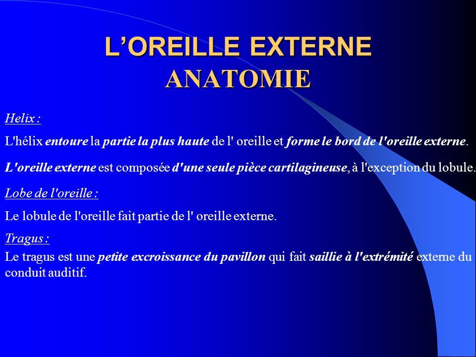 L'OREILLE EXTERNE ANATOMIE