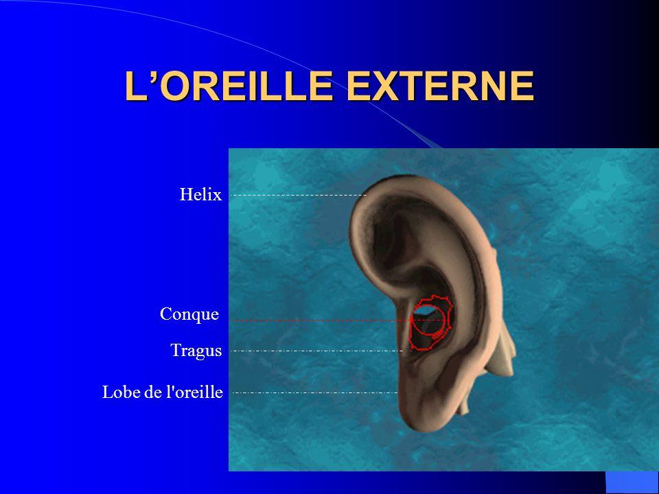 L'OREILLE EXTERNE Helix Conque Tragus Lobe de l oreille