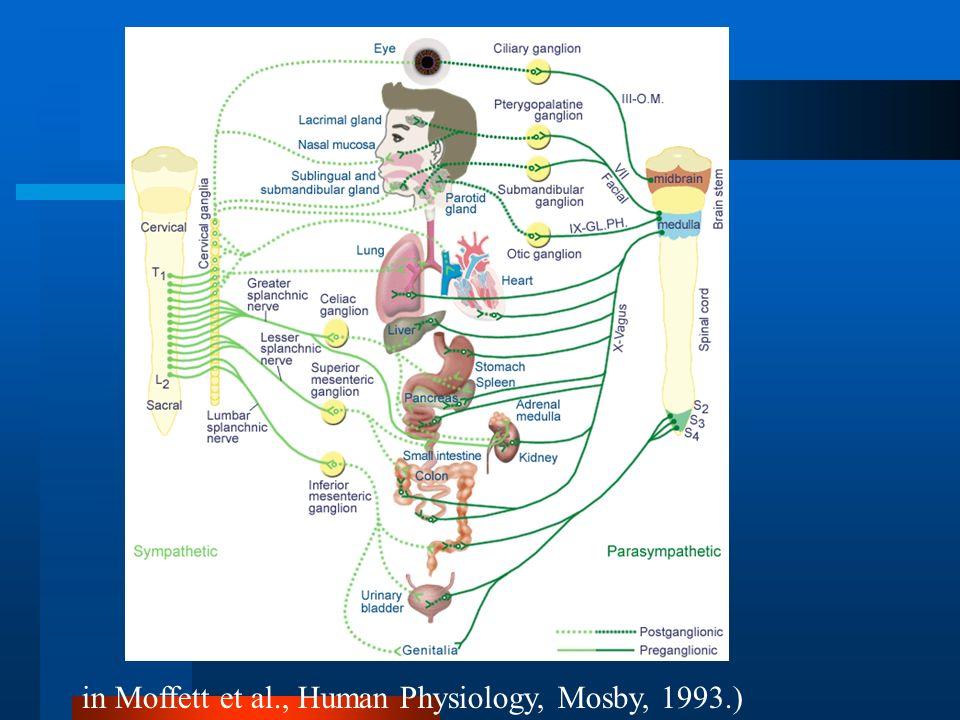 in Moffett et al., Human Physiology, Mosby, 1993.)