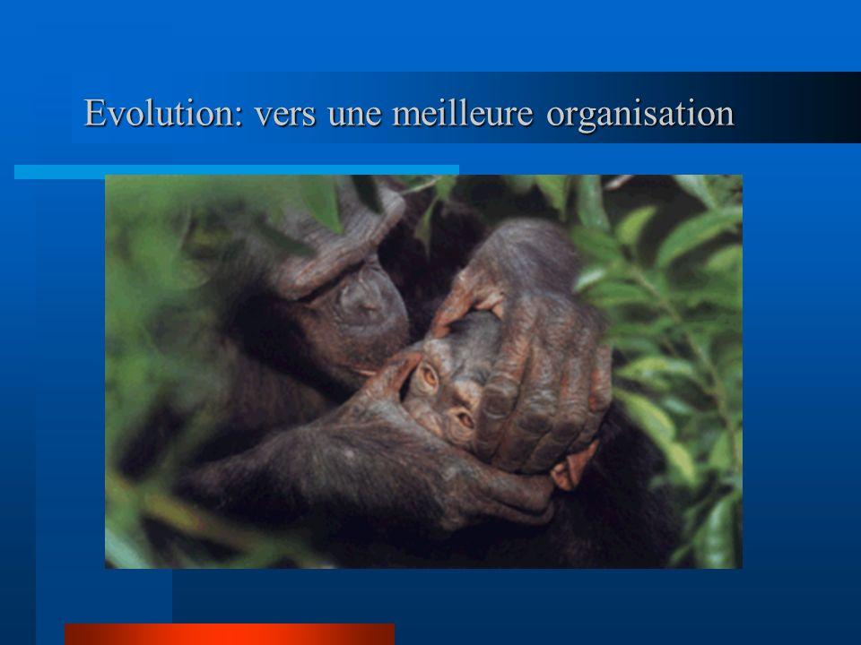 Evolution: vers une meilleure organisation