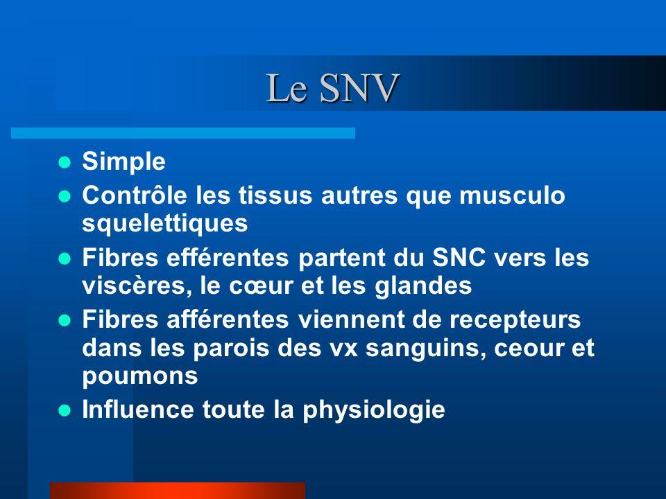 Le SNV Simple Contrôle les tissus autres que musculo squelettiques