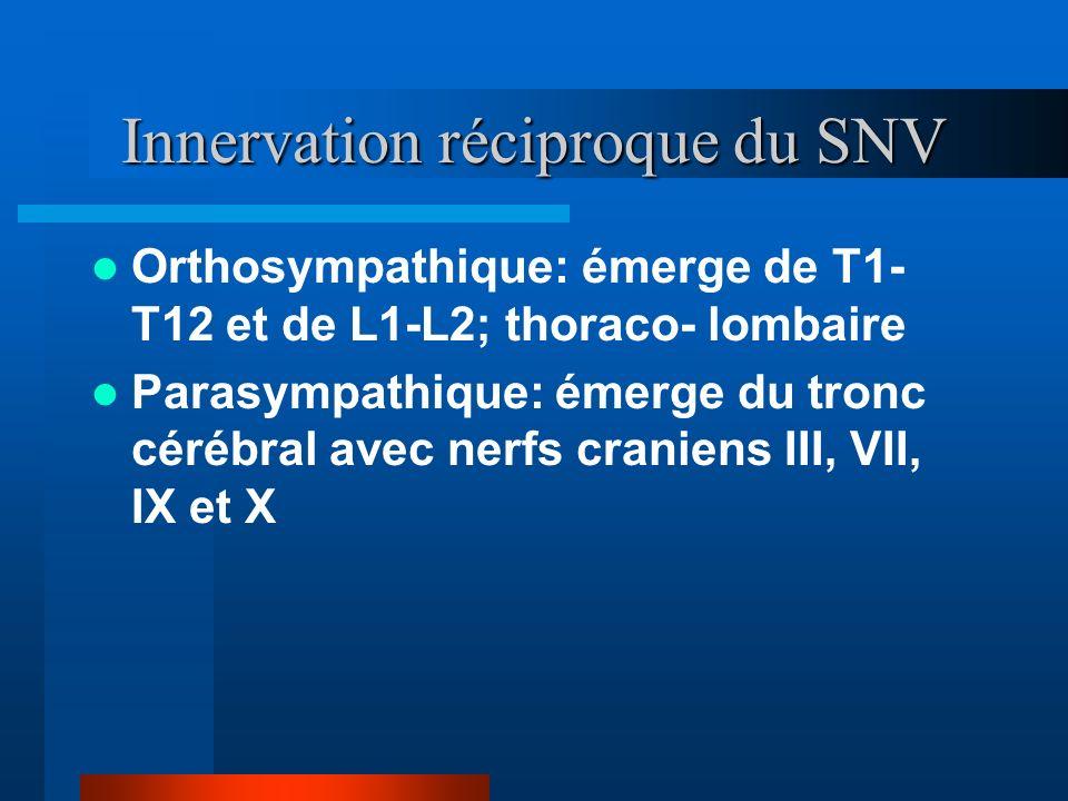 Innervation réciproque du SNV