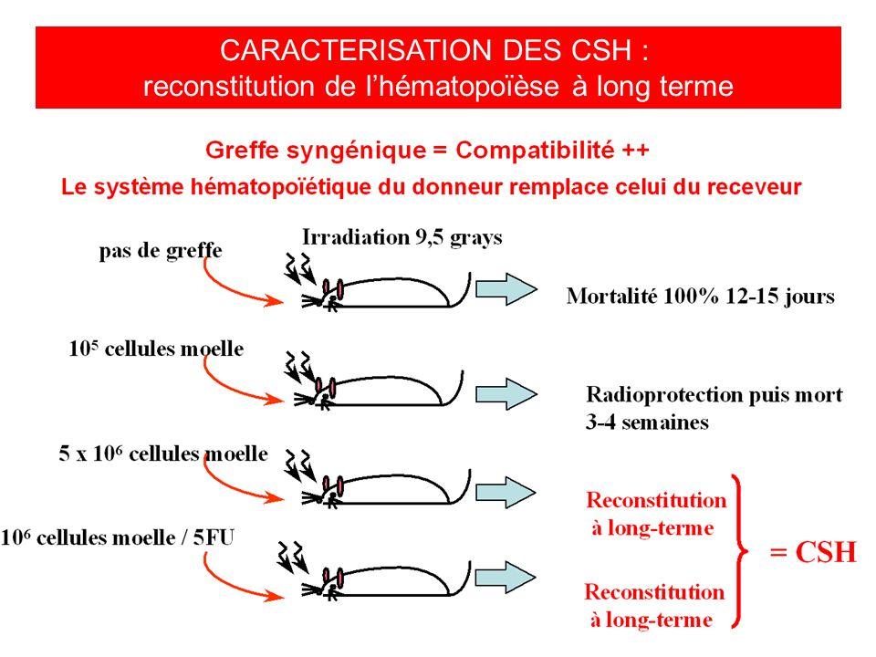CARACTERISATION DES CSH :