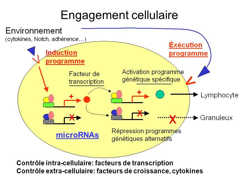 Engagement cellulaire