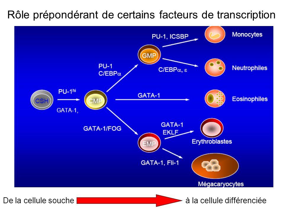 Rôle prépondérant de certains facteurs de transcription