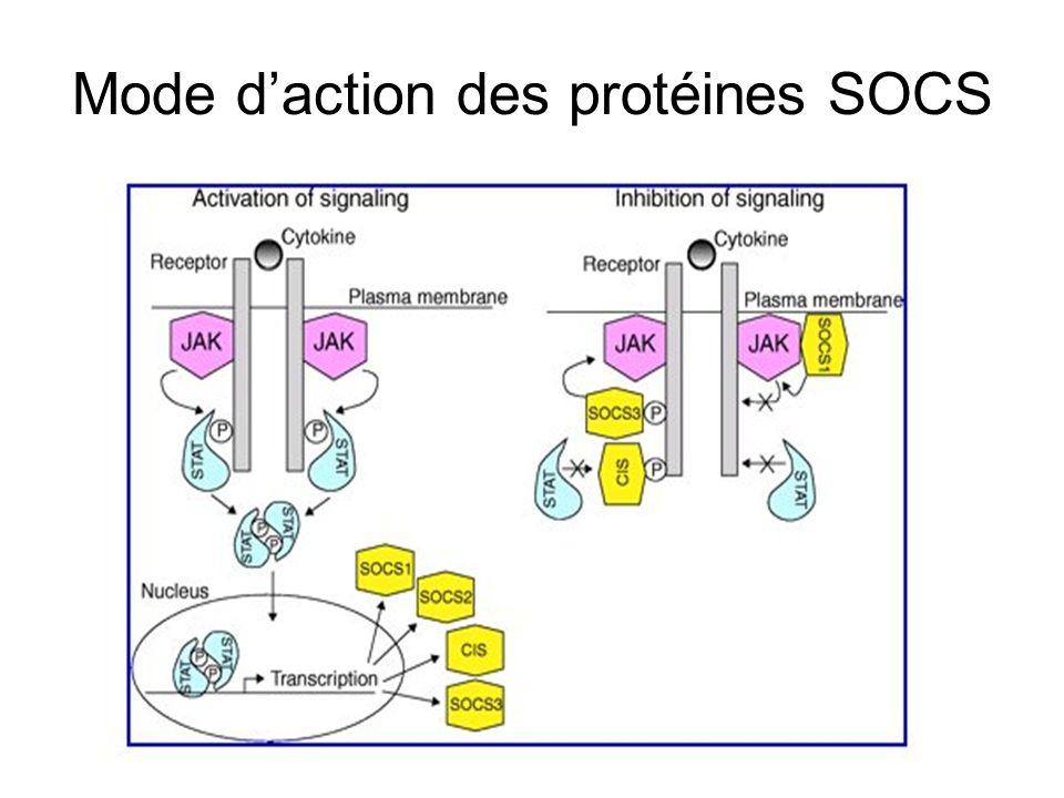 Mode d'action des protéines SOCS