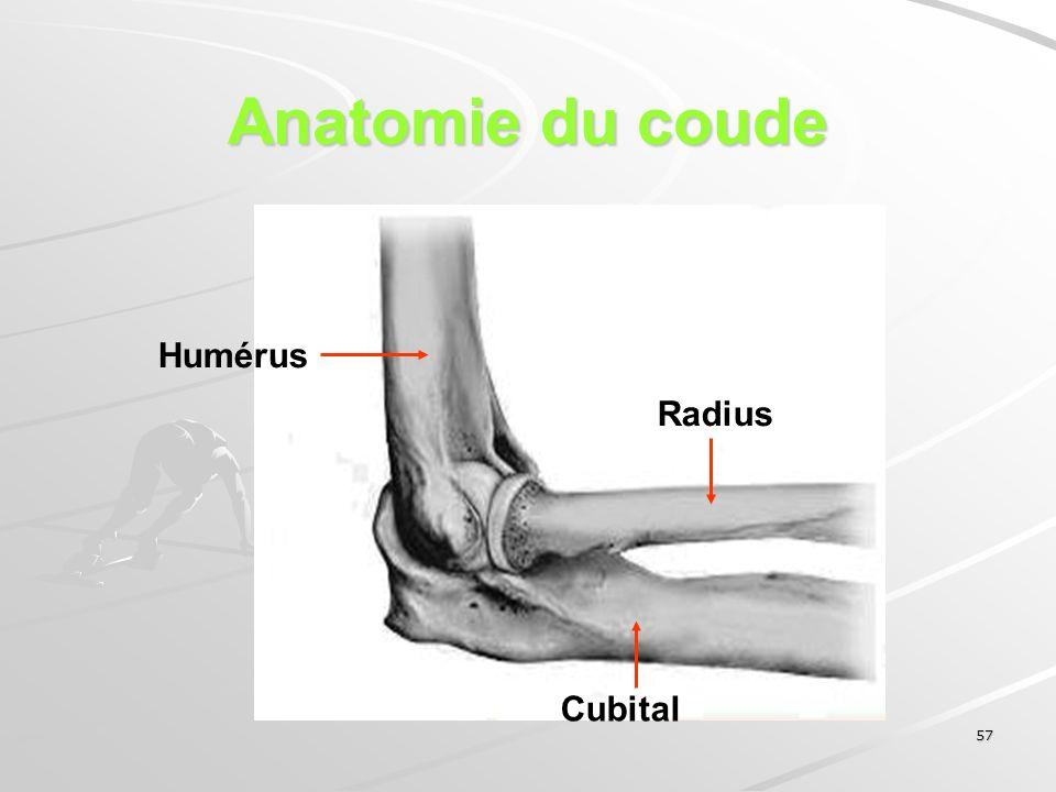 Anatomie du coude Humérus Radius Cubital