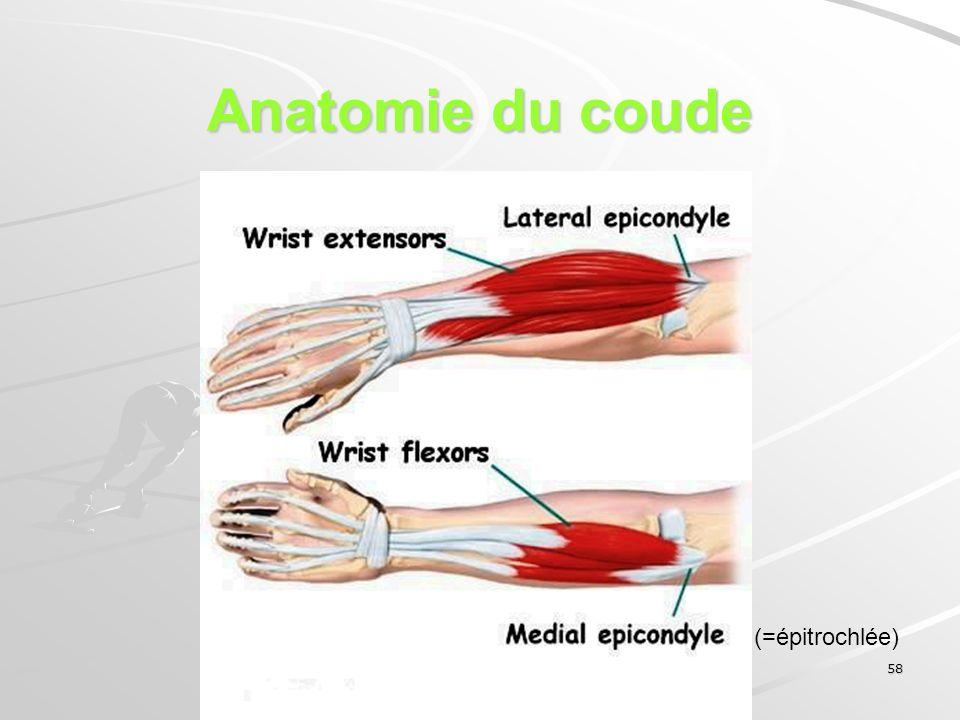 Anatomie du coude (=épitrochlée)