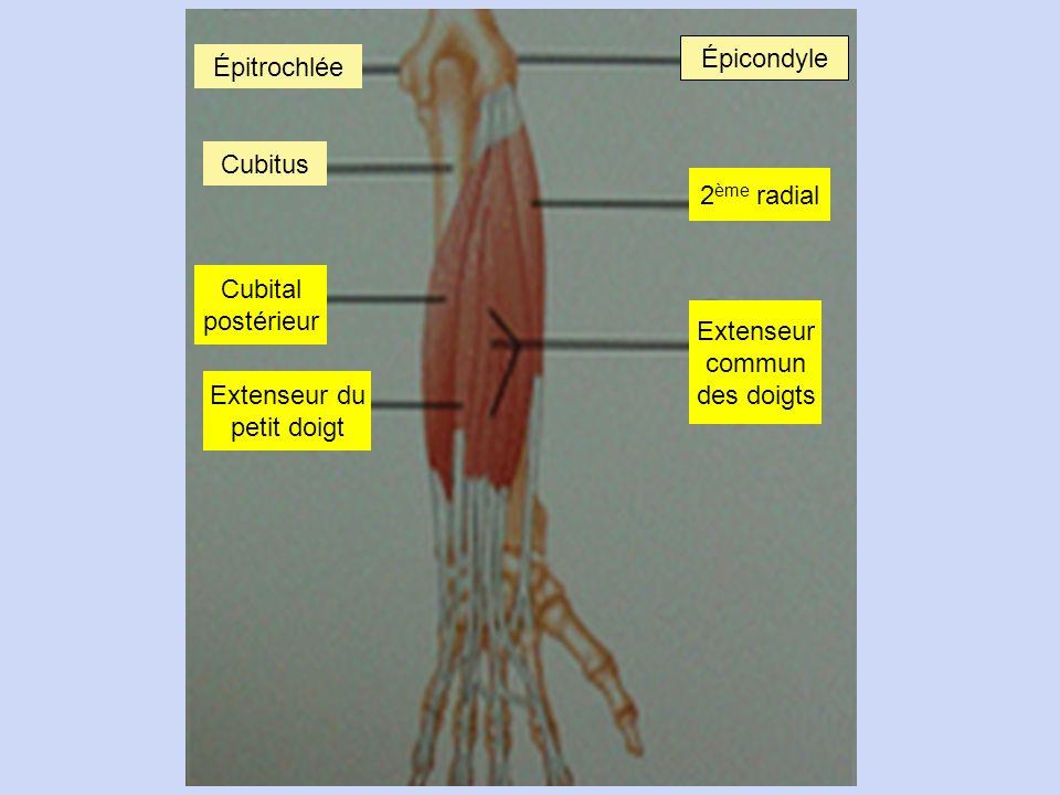 Épicondyle Épitrochlée. Cubitus. 2ème radial. Cubital. postérieur. Extenseur. commun. des doigts.