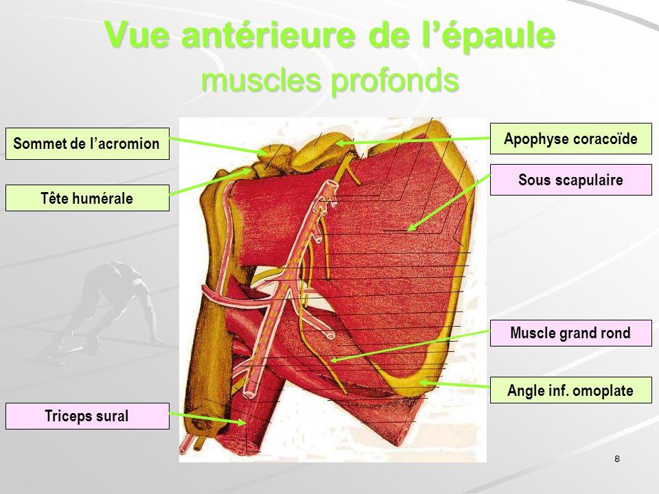 Vue antérieure de l'épaule muscles profonds