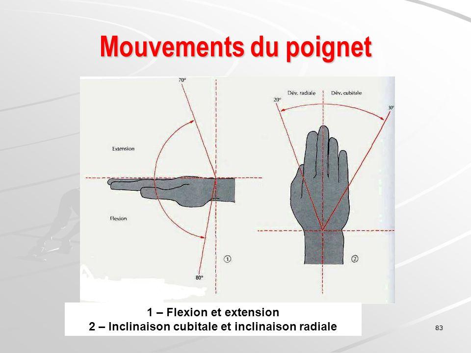 2 – Inclinaison cubitale et inclinaison radiale