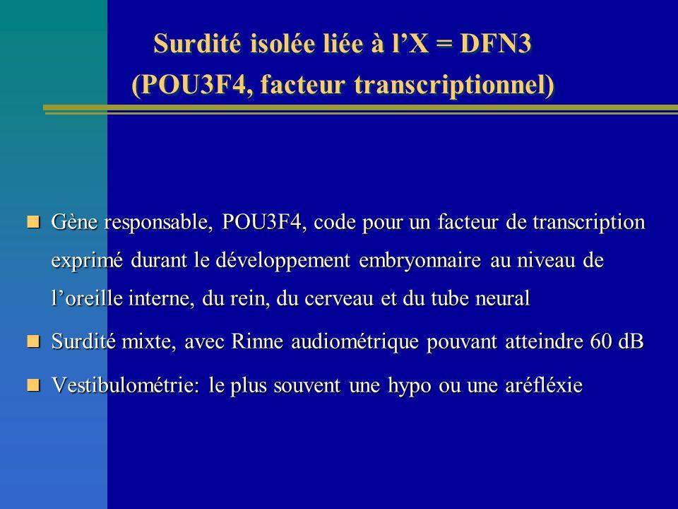 Surdité isolée liée à l'X = DFN3 (POU3F4, facteur transcriptionnel)