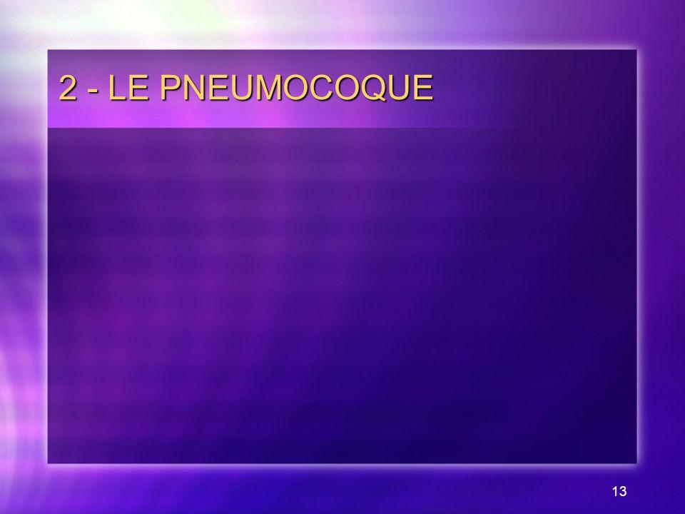 2 - LE PNEUMOCOQUE