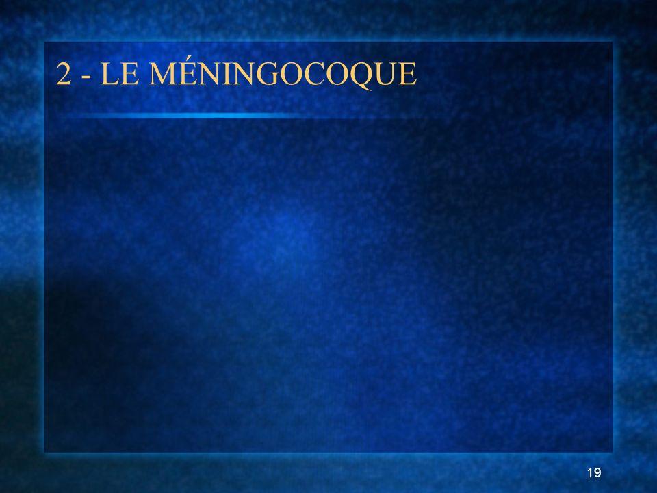 2 - LE MÉNINGOCOQUE