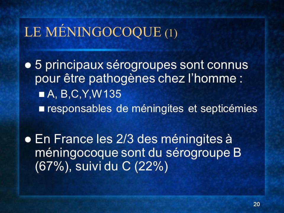 LE MÉNINGOCOQUE (1) 5 principaux sérogroupes sont connus pour être pathogènes chez l'homme : A, B,C,Y,W135.
