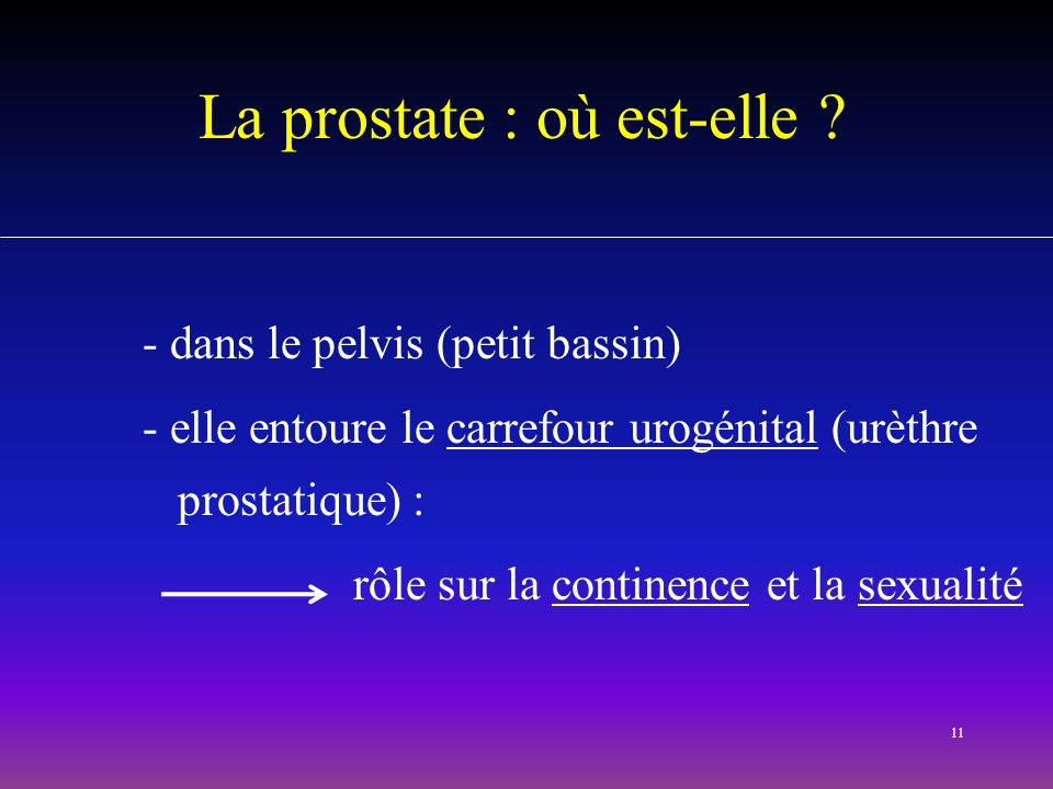La prostate : où est-elle