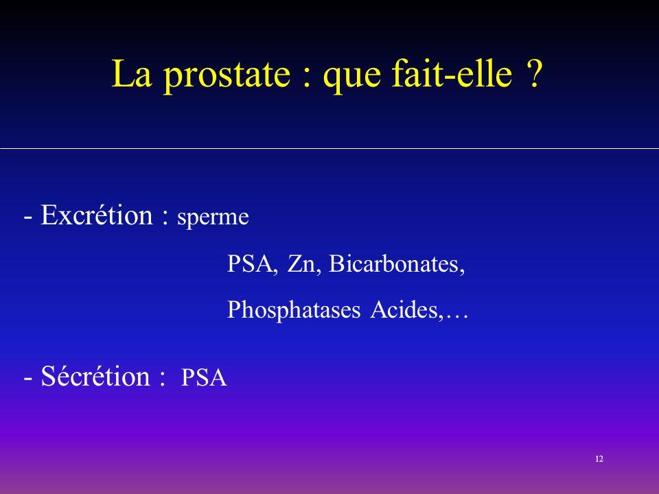 La prostate : que fait-elle