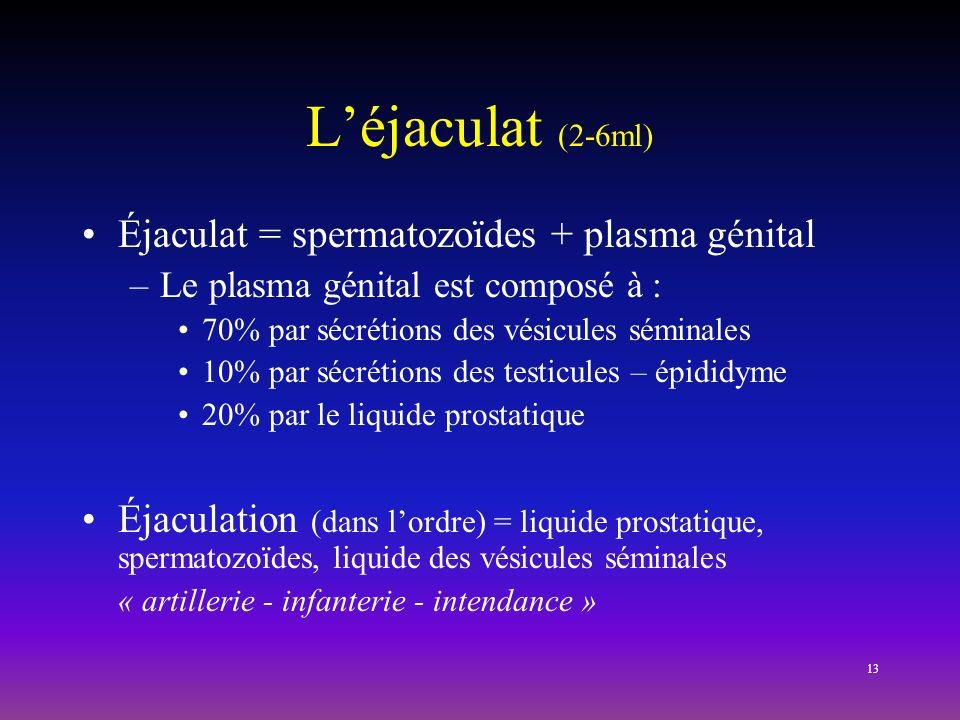 L'éjaculat (2-6ml) Éjaculat = spermatozoïdes + plasma génital