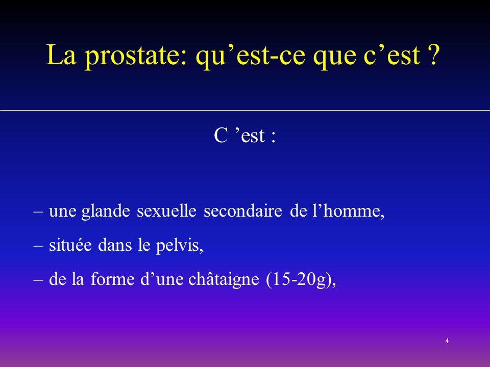 La prostate: qu'est-ce que c'est