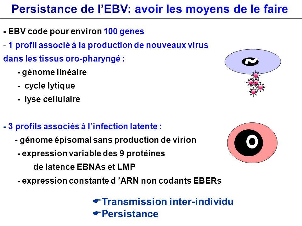 Persistance de l'EBV: avoir les moyens de le faire