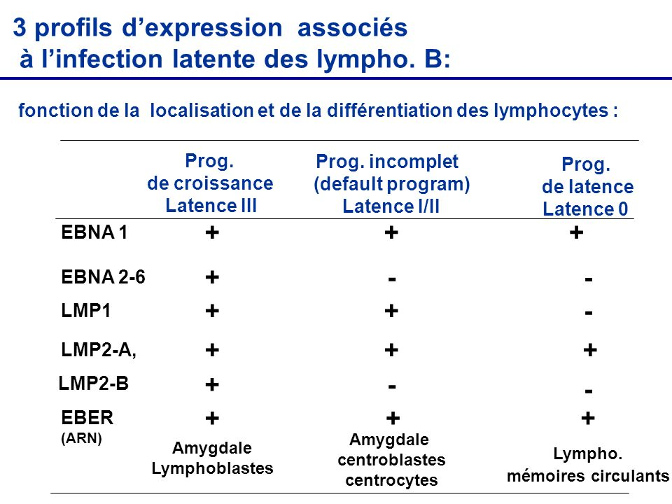 3 profils d'expression associés à l'infection latente des lympho. B: