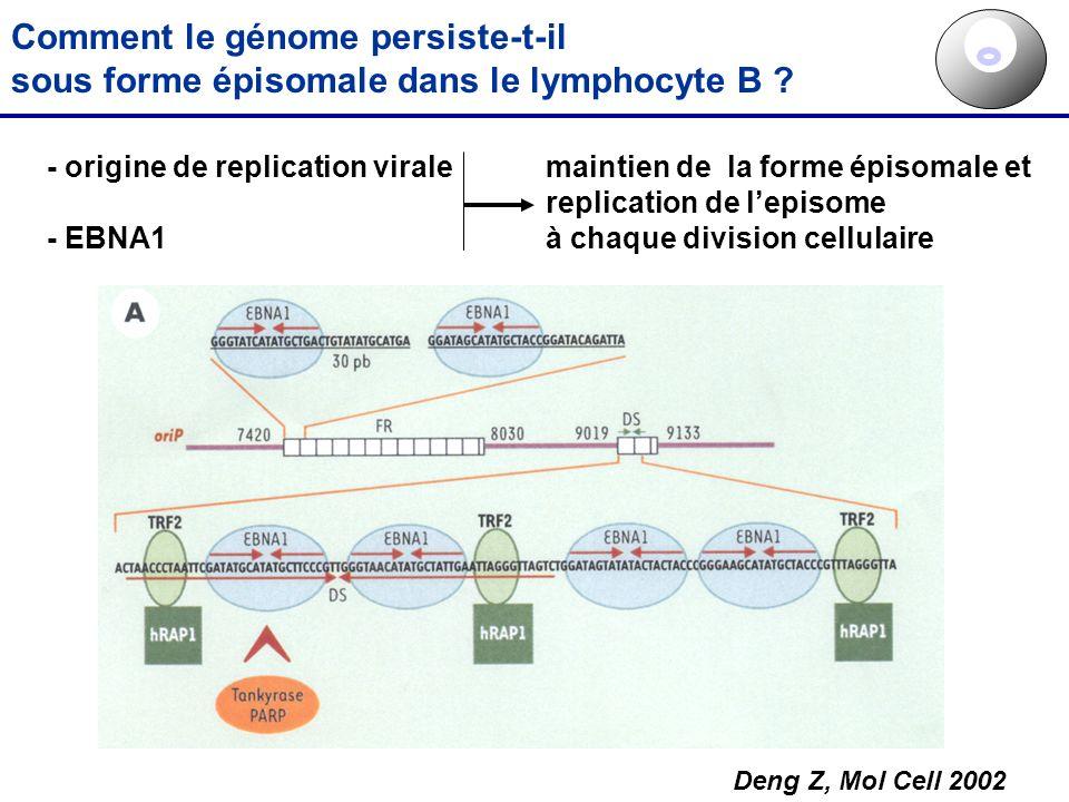 Comment le génome persiste-t-il