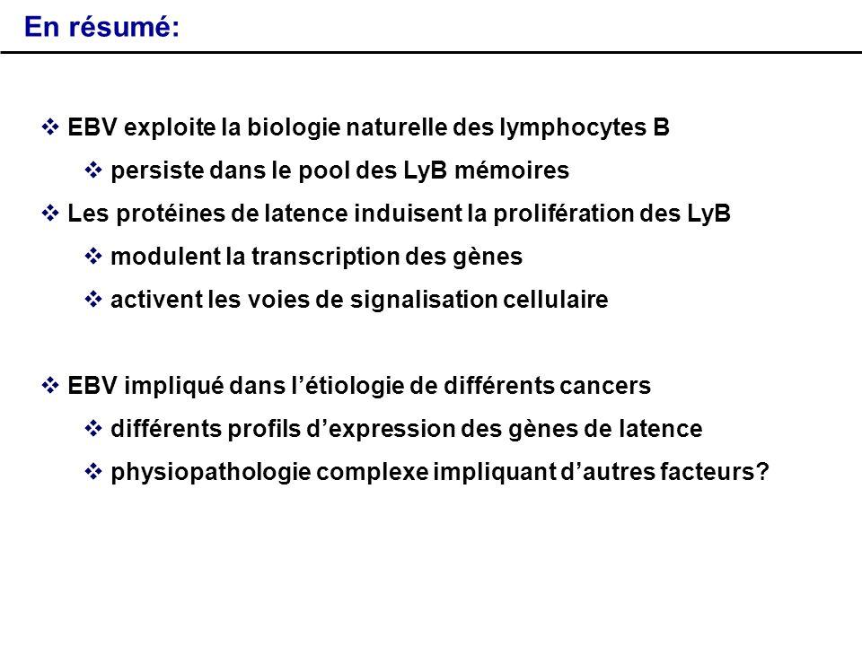 En résumé: EBV exploite la biologie naturelle des lymphocytes B