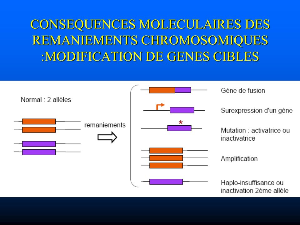 CONSEQUENCES MOLECULAIRES DES REMANIEMENTS CHROMOSOMIQUES :MODIFICATION DE GENES CIBLES