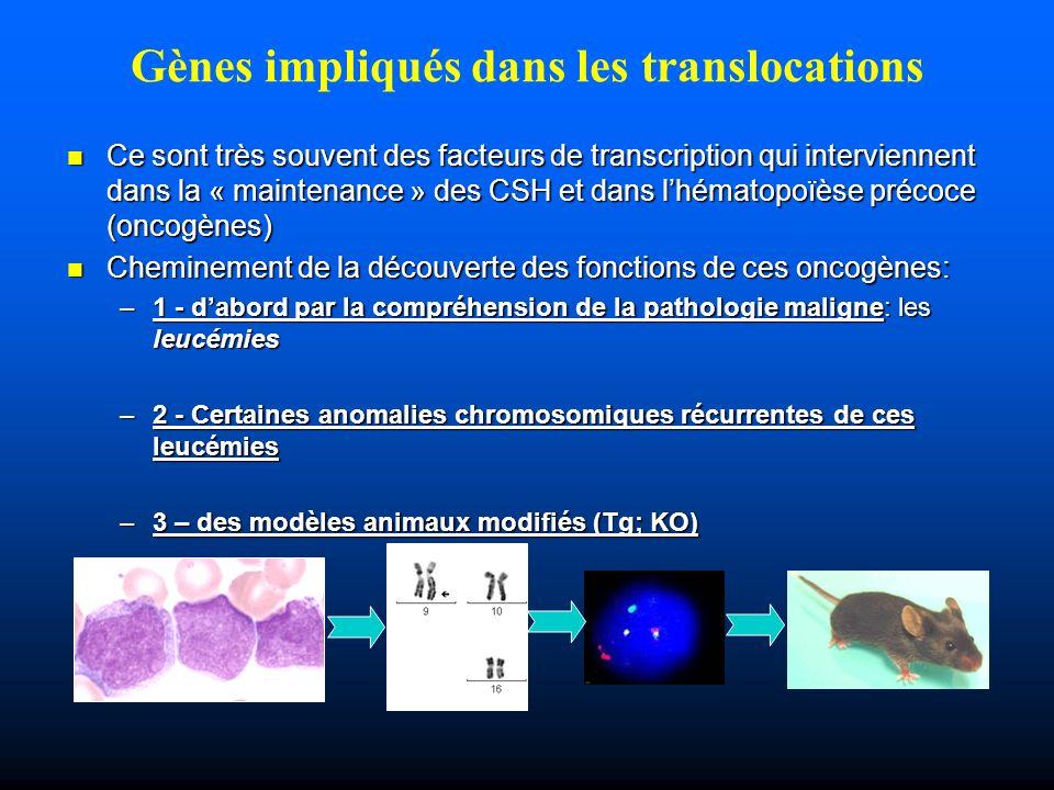 Gènes impliqués dans les translocations
