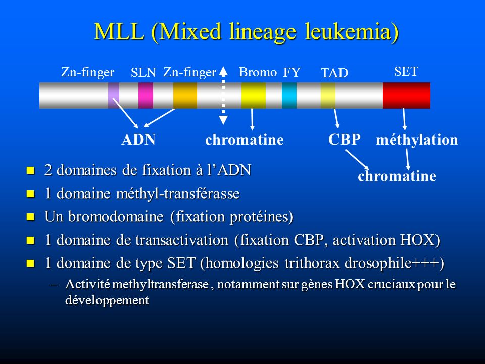 MLL (Mixed lineage leukemia)