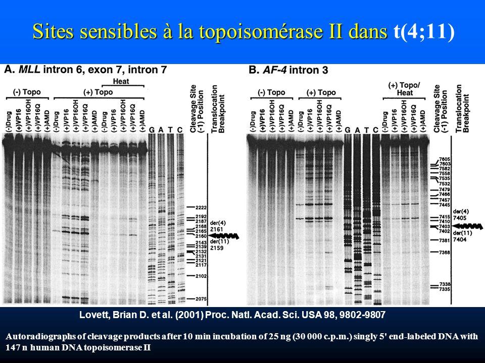 Sites sensibles à la topoisomérase II dans t(4;11)