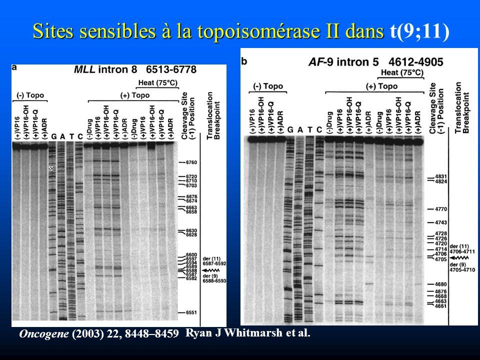 Sites sensibles à la topoisomérase II dans t(9;11)