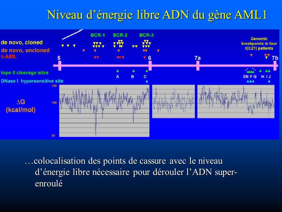 Niveau d'énergie libre ADN du gène AML1