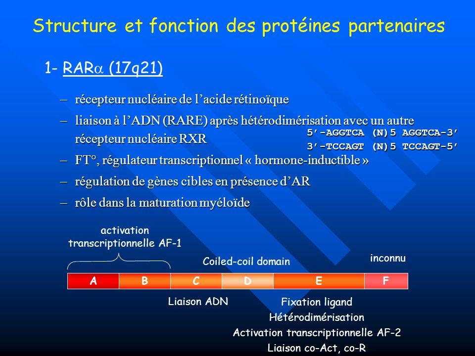 Structure et fonction des protéines partenaires