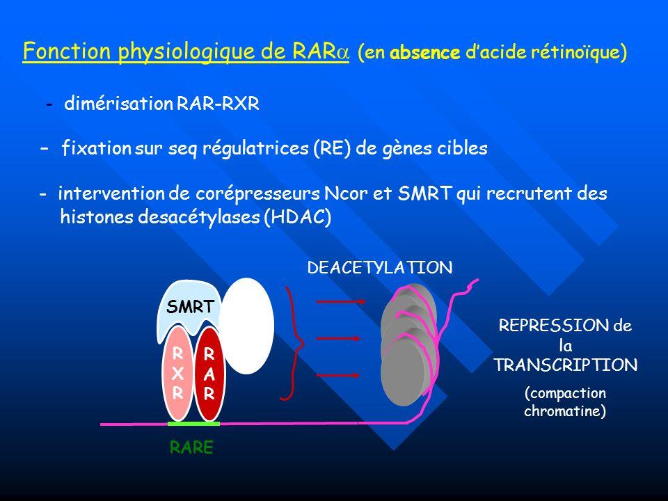 Fonction physiologique de RAR (en absence d'acide rétinoïque)