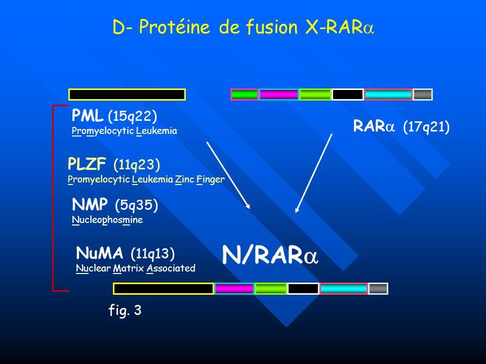 D- Protéine de fusion X-RAR