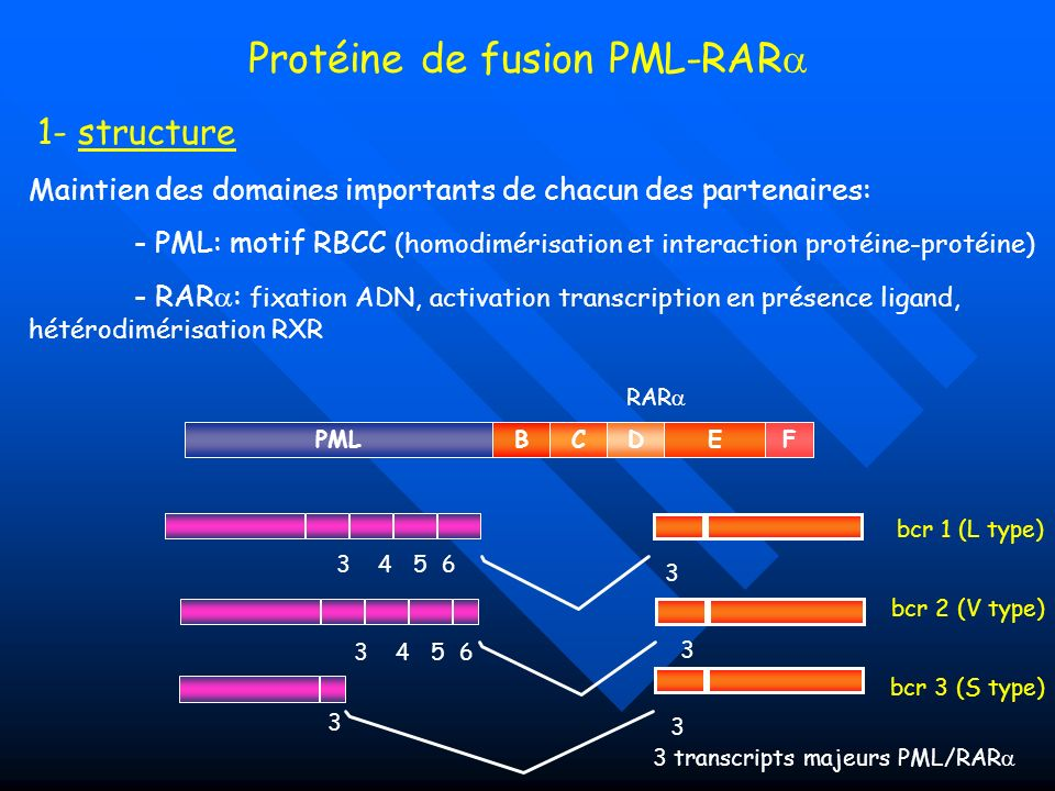 Protéine de fusion PML-RAR
