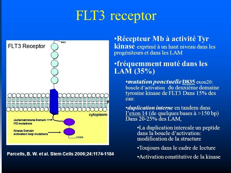 FLT3 receptor Récepteur Mb à activité Tyr kinase exprimé à un haut niveau dans les progéniteurs et dans les LAM.