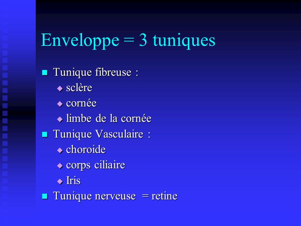 Enveloppe = 3 tuniques Tunique fibreuse : sclère cornée