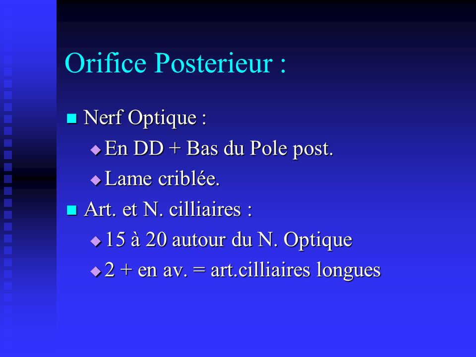 Orifice Posterieur : Nerf Optique : En DD + Bas du Pole post.