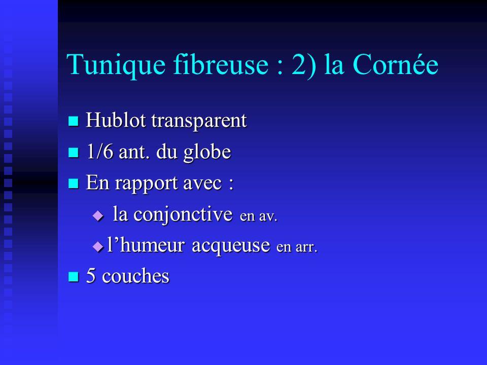 Tunique fibreuse : 2) la Cornée